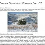 Saracena, Pircoca bianco '10 Masseria Falvo 1727 _ L' A r c a n t e-1